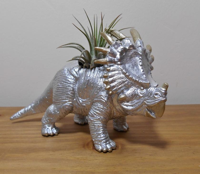 Styracosaurus Ionantha Ionantha (1)