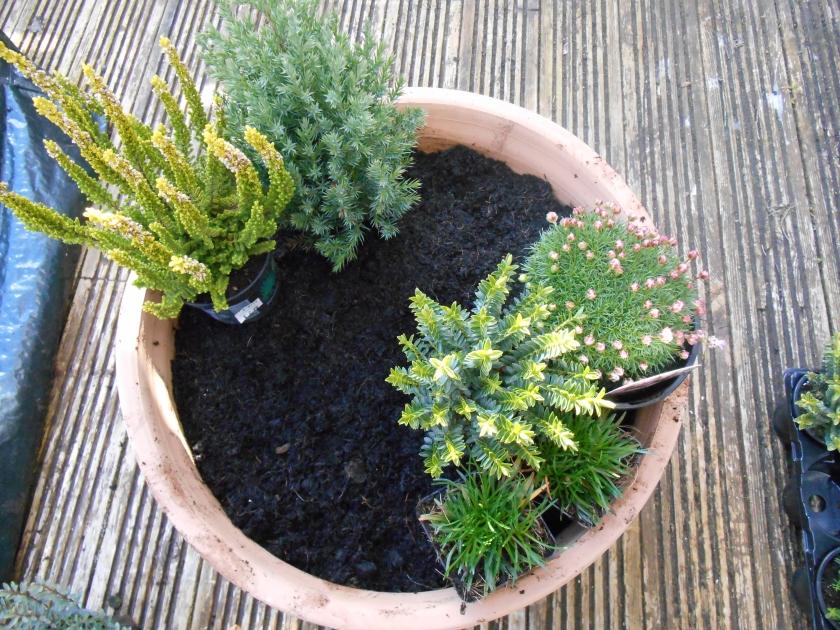 PlantArrangement (1)