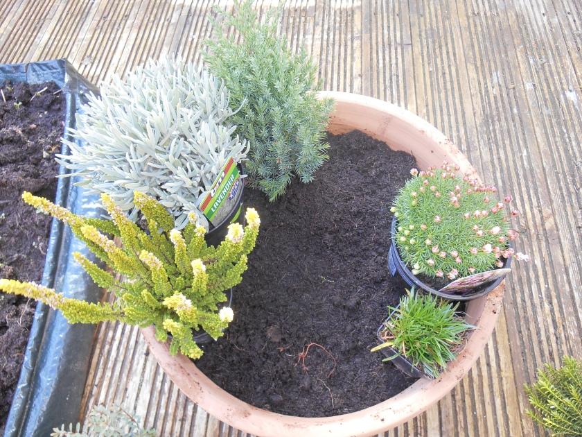 PlantArrangement (2)