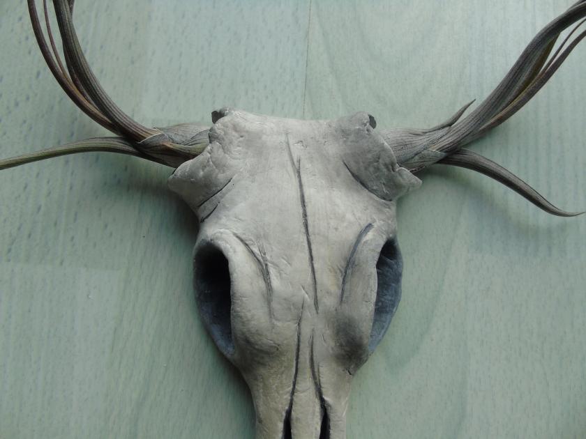 Sahara Skull Detail.JPG