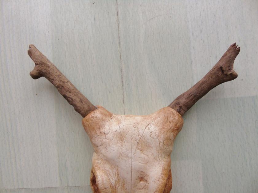 Yuma Horn Close up.JPG